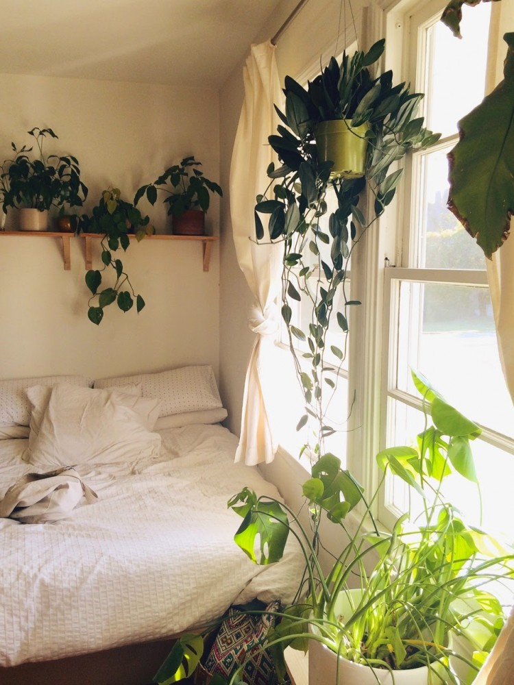 bohemain bedroom house plants