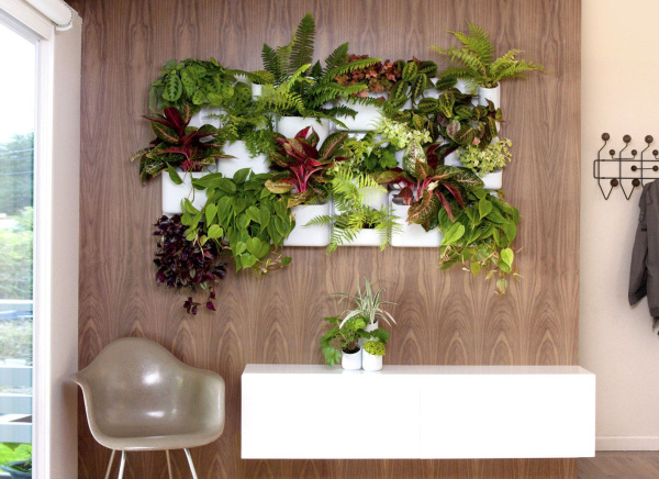 Colorful houseplants cascade out of a wall container. (Photo by Urbilis)